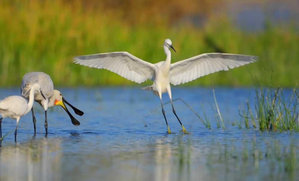 Egeli turizmci Kuş Cenneti'nin geleceğinden endişeli