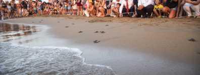 Yavru kaplumbağalar Akdeniz'den Turkcell'le hayata bağlandı