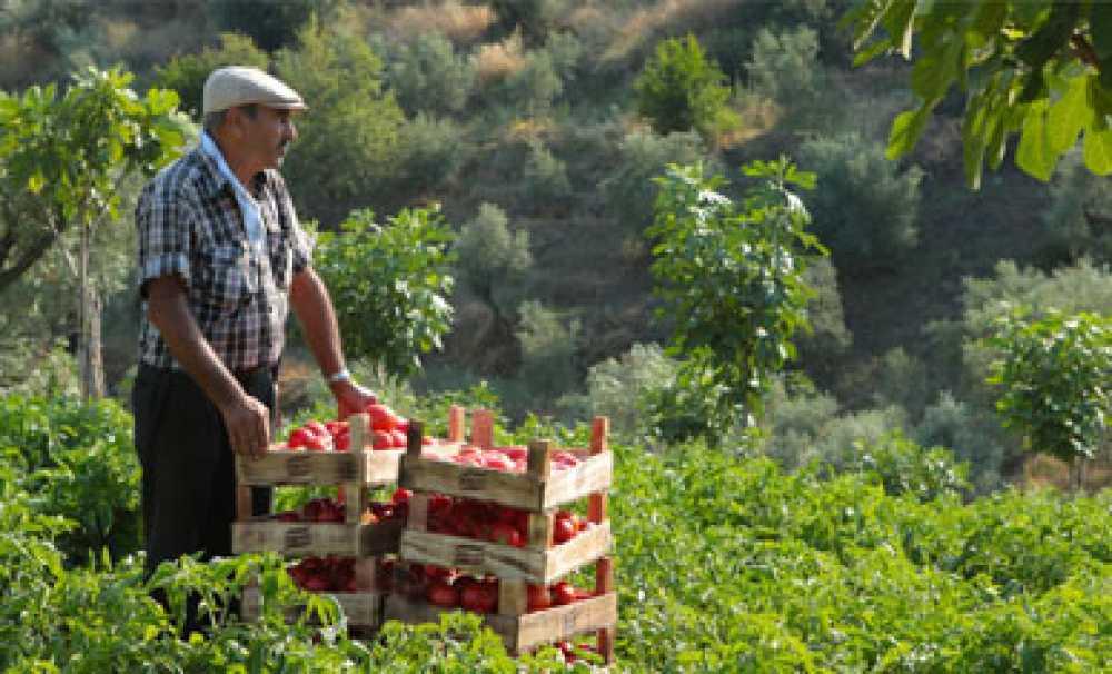 Knorr Bursa Karacabey'deki domates tarlasını ziyaretçilere açıyor
