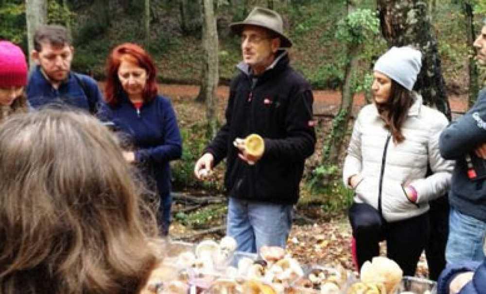 FEST Gezginleri Belgrad Ormanı'nda Mantar Avına Çıktı