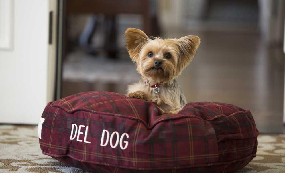 Seyahate çıktığınızda köpeklerinizi ne yapıyorsunuz?