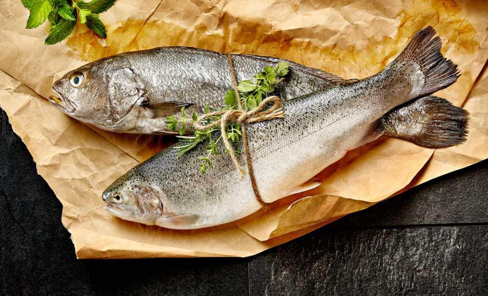 Kuzey Irak sofralarını Türk balıkları süsleyecek
